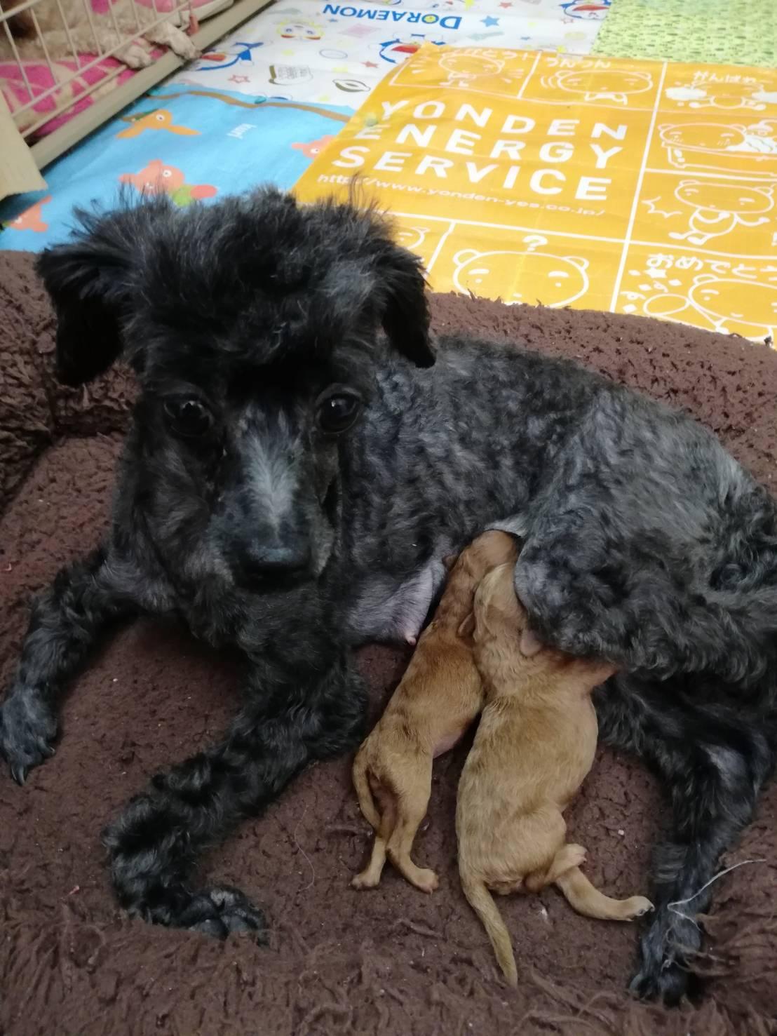 母親犬リン、赤ちゃん出産